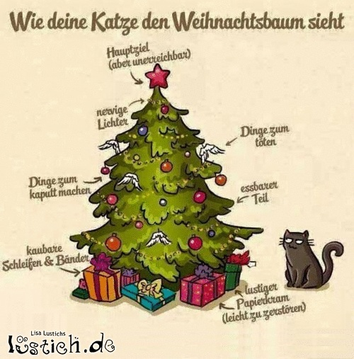 wie sieht mietzi einen weihnachtsbaum schmunzelecke katzenforum mietzmietz das forum ber. Black Bedroom Furniture Sets. Home Design Ideas