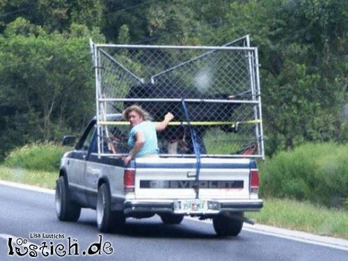 Wie man eine Kuh nicht transportiert