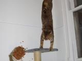 Sportliche Katze