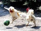 Tierischer Sport