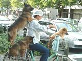 Hundetransport