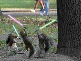 Star-wars Eichhörnchen