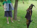 Tierischer Tanz