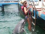 Frecher Delphin
