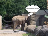 Elefant ist eingeschnappt