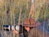Erdmännchen verarscht Tierfotograf