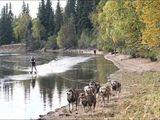 Wasserki mit Hunden