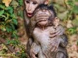 Affen spielen Versteckspiel