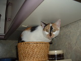 Katze im Bötchenkorb.