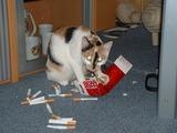Die Drogen-Katze.