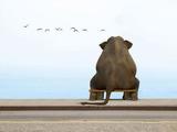 Einsamer Elefant