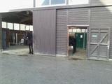 Langes Pferd