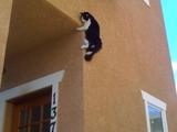 Ninja-Katze