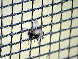 Fliege im Netz