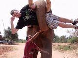 Elefantenkraft