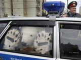 Eisbär verhaftet