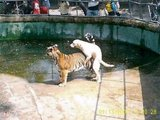 Hundebesuch im Zoo