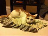 Mein Geld