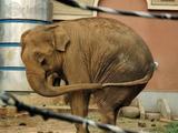 Der einsame Elefant
