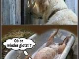 Glotzer-Hund