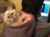 Katzenkaputze