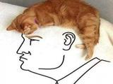Trumps Haare