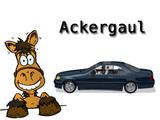 Ackergaul