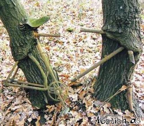 Baum frisst Rad
