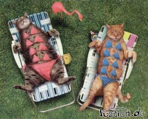 Katzenbikini
