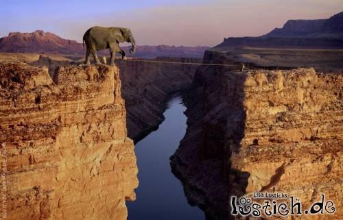 Elefant auf dem Seil