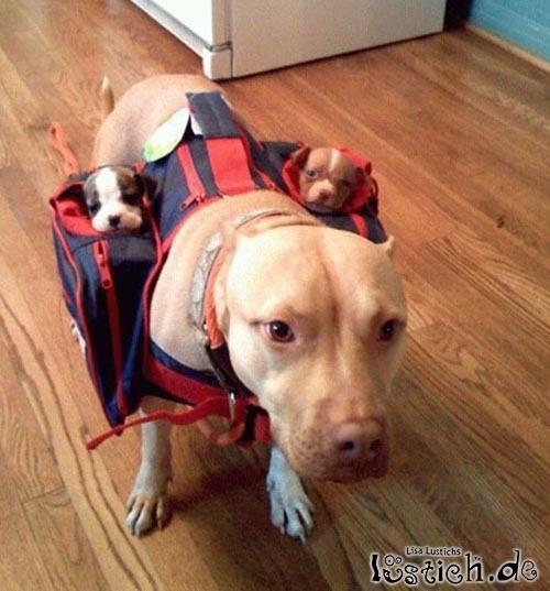 Die Hundebabytragetasche
