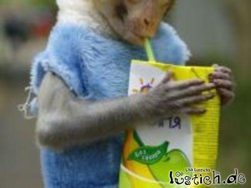 Affe trinkt Bananensaft