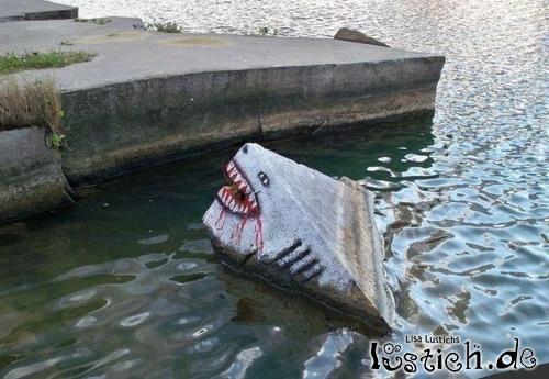 Hai im Wasser