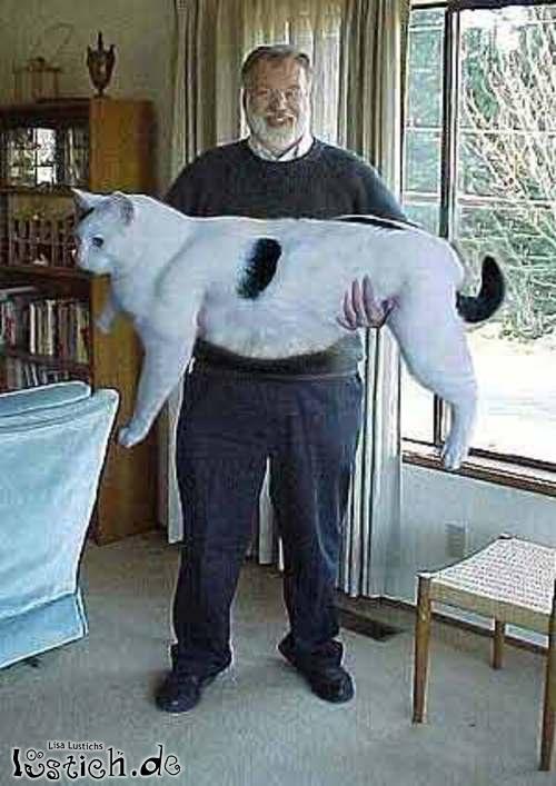 Große, dicke Katze