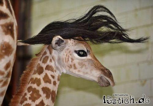 Giraffen-Elvis