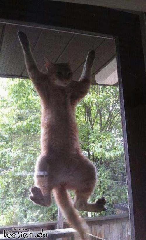 Lass mich rein!