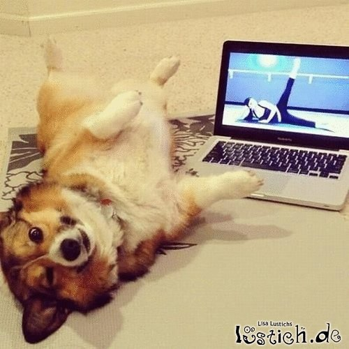 Kleiner Yoga-Hund