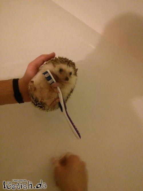 Meine Zahnbürste