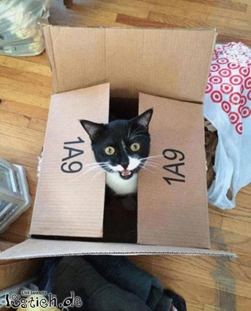 Neue Kiste
