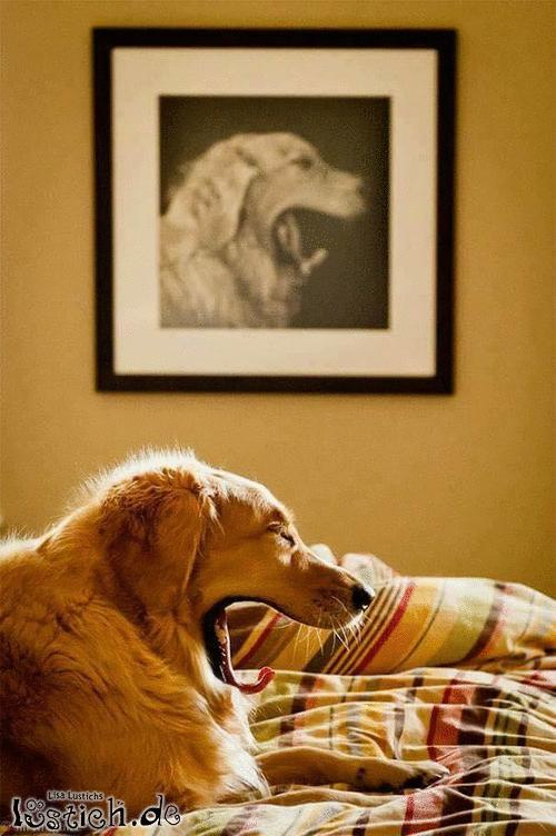 Model-Hund