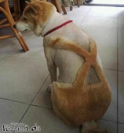 1a Hundefriseur
