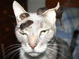 Die Katze lässt das mausen nicht