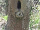 Weiblicher Baum