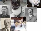 Dikatoren-Katzen