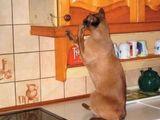 Nachdenkliche Katze