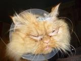 Außerirdische Katze