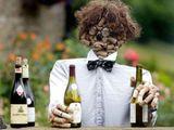 Verkorkste Weinprobe