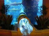 Rutsche durch Aquarium