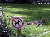katzenfreundliche Umgebung