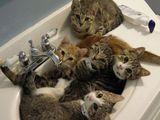 Katzenbecken
